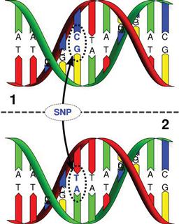 Схема генома